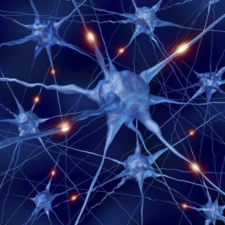 nerveceller2